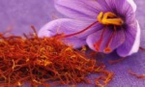 زعفران سحرخیز